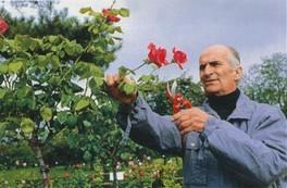 Louis de Funès et ses roses