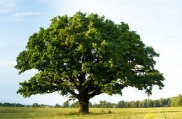 Exposition L'arbre, vie et usages